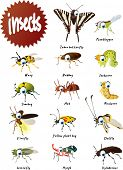 pic of vespa  - Vector Cartoon Insects Big Set - JPG