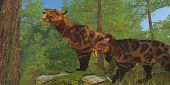 stock photo of saber tooth tiger  - Two Saber - JPG