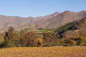 image of hacienda  - Vineyards in the Limari Valley in Central Chile - JPG