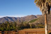 stock photo of hacienda  - Vineyards in the Limari Valley in Central Chile - JPG