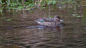 stock photo of upstream  - Female Green - JPG