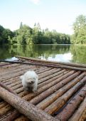 picture of flatboat  - A muddy white dog  - JPG