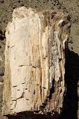 stock photo of petrified  - Petrified wood in the petrified forest of Sarmiento in Patagonia - JPG