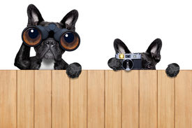 picture of snoopy  - father and son dogs spying behind wood fence with camera and binoculars - JPG