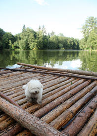 pic of flatboat  - A muddy white dog  - JPG