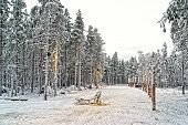 stock photo of laplander  - Sledge at snow valley in finnish Lapland in winter - JPG