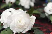 picture of winterberry  - white rose flowers made out of coffee filters used in wedding bouquet - JPG