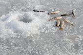 image of ice fishing  - Ice fishing - JPG