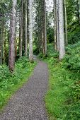 stock photo of coniferous forest  - Gravel forest road in coniferous forest that leads to the top - JPG