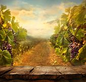 stock photo of wine grapes  - Vineyard tabletop design - JPG