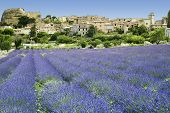 Lavender Fields Hilltown Provence France