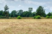 picture of dry grass  - Field with dried grass bushes and trees - JPG