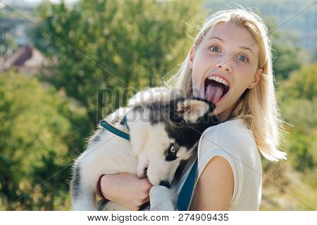poster of My Siberian Husky Is Extremely Naughty. Happy Girl Hold Pedigree Dog. Sexy Woman With Dog Pet On Sum