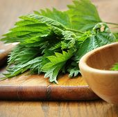 Medicinal Plant Fresh Stinging Nettle On A Cutting Board poster