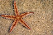Starfish Lying On Sand. Starfish Lying On The Sand On The Beach. poster