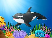 Cute Killer Whale Under Water With Happy poster