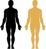 stock photo of human body  - Human body on separate layers - JPG