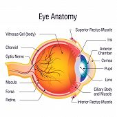Eye Anatomy Info Concept Background. Cartoon Illustration Of Eye Anatomy Info Concept Background For poster