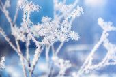 Flower In Winter With Frozen Ice Crystals. Beautiful Winter Seasonal Natural Background. Winter Land poster