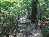 Staircase Leading Down In The Forest. Seoraksan National Park. South Korea poster