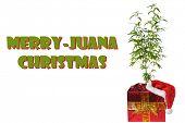 Marijuana Christmas gift. Merry - Juana Christmas text. Marijuana Plant in a Christmas Gift box with poster