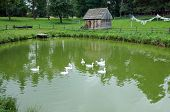 picture of polonia  - small hut and ducks swimming in pond in the Masuria region in Poland - JPG