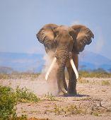 Постер, плакат: Старый слон