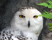 image of hedwig  - Close - JPG
