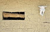 foto of cow skeleton  - Cow skull with horns on wall of ground - JPG