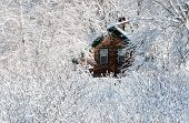 stock photo of shingles  - Wood shingled house surrounded by snow covered bushes and trees in New England after a storm - JPG
