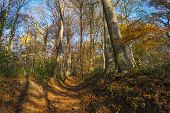 foto of hollow  - Hollow way in a sunny forest in autumn