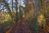 foto of hollow  - Hollow way in a sunny forest in autumn  - JPG