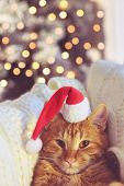 image of lovable  - Lovable ginger cat wearing Santa Claus hat looking at camera over Christmas tree at home - JPG