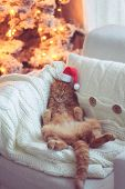 picture of lovable  - Lovable ginger cat wearing Santa Claus hat sleeping on chair near Christmas tree at home - JPG