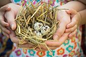 foto of human egg  - Adult and child are holding nest in palms - JPG