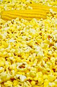 pic of corn cob close-up  - Two ears of corn of popcorn close up - JPG
