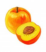 stock photo of testis  - vector paint hand drawn picture of peaches - JPG