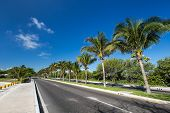stock photo of caribbean  - Caribbean street road with palm trees - JPG