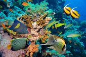 stock photo of coral reefs  - Tropical Fish and Coral Reef on Red Sea - JPG