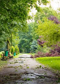 stock photo of hurricane wind  - Asphalt path and damaged tree by hurricane wind after storm in park - JPG