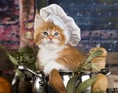 Kitten in a cooks cap, Cat cook poster