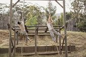 Military soldiers climbing rope during obstacle course training at boot camp poster