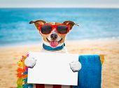 Dog Siesta On Beach Chair poster