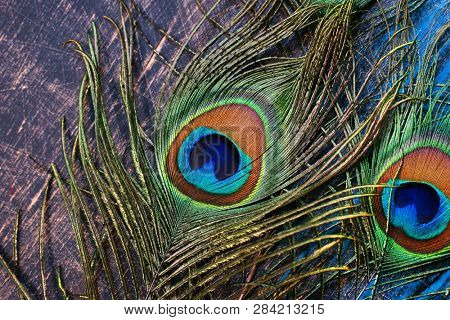 Peacock feathers Color feather