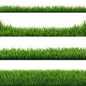 Green Grass Borders Set White Background  poster