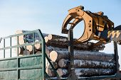 Tractor Loads Logs. Logs Taken Away. The Manipulator Loads The Logs. Trees Sawed. poster