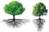 Постер, плакат: Деревья с корнями