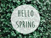 Hello Spring Text Sign On Green Grass, Leaves Or Plants. Spring Fresh Image Of Grassland. Earth Day poster