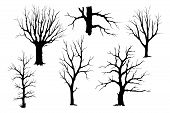 Trees Without Leaves, Hand Drawing Silhouette. Trunks And Branches Of Different Types Of Trees, Vect poster