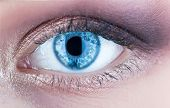 Macro Of Human Eye. Closeup Of Blue Human Eye. Human Eyes Close-up Detail. Female Eyes With Long Eye poster